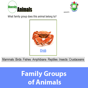 Family Groups of Animals