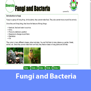 Science Note - Fungi and bacteria